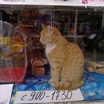 Ищу работу котом. График работы прилагается