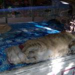 Работавший в упаковочном магазине кот мог легко принять форму любой тары