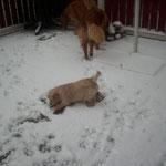 Aurel und der erste Schnee