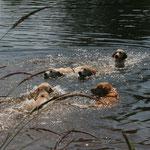 am Anfang gab's ein erfrischendes Bad für die Enthusiastic Swimmers