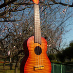 Koni Koni  Maple Concert    http://www.espguitars.co.jp/