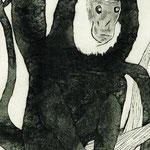 猿 Monkey