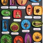 Collection d'insectes en feuilles pour Milan presse