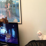 Qui dit qu'un chat ne peut faire ça ? Inlove oui !!