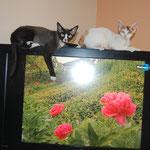 Hagrid & Halizée & fleurs virtuelles