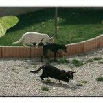 Brume de Comête et  Galinka (la noire et blanche) chez Kristine (Vaucluse)