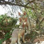 Dali et Helloboy perchés en Corse