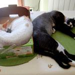 Haliizée & Hagrid sieste dos à dos