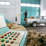 In Säcken werden die Oliven in der Ölmühle angeliefert.