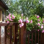 la terrasse au printemps