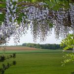 la vue au printemps