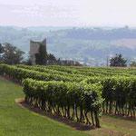 Chemin de compostelle à travers les vignes, sur les côteaux de Sainte Foy la Grande