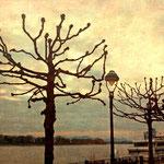 Rhine promanade Bonn