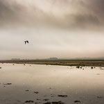 Seagull's Flying (Holy Island, Schottland)