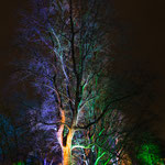 Tree at night (Westfalenpark, Dortmund)
