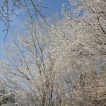 どの木も本当に綺麗な雪の花が咲いています。