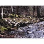 Ruisseau du Vialaïs