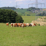 Kühe vor Eibenberg