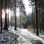 Den Waldweg hinauf