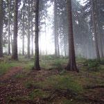 Nach dem Gewitter im Wald