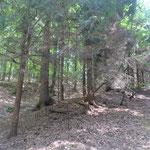 Im Fichtenwald verläuft ein Graben parallel zum Weg