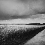 Vexin, le colza sur le plateau d'Auvers-sur-Oise