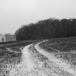 Vexin, plateau d'Auvers-sur-Oise  (4)