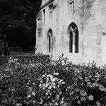 Le jardin médiéval, les ancolies (12)