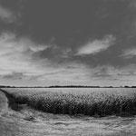 Vexin, le colza sur la route d'Epiais-Rhus, 11 avril 2009, 10 h