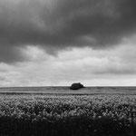 Vexin, le colza aux environs de  Labbeville