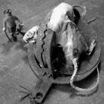 La visite à  Monsieur rat (2)