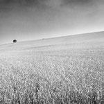 Vexin, le plateau d'Auvers-sur-Oise (77)