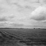 Vexin, le lin aux environs de Montagny (2)