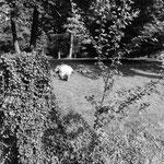 Abbaye de Maubuisson, le dormeur du parc (2)