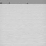 Vexin, plateau d'Auvers, 20 décembre 2010