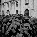 Le jardin médiéval (7)