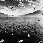 Lac Léman, février 1997, 17h.  (1)