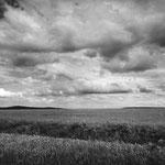 Vexin, le colza aux environs de Labbeville (1)