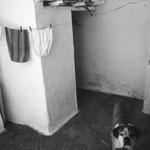 le chien qui aboyait espagnol