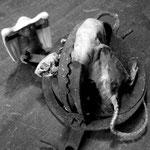 La visite à  Monsieur rat (3)