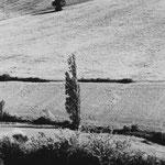 Paysage du Gers, série 2 (10)