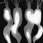 les carottes de Liouba