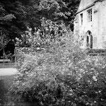 Le jardin médiéval (5)