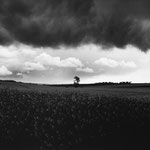 Vexin, le colza aux environs de Vigny (2)