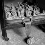 Les betteraves en résidence (6)