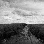 Vexin, colza sur le plateau d'Auvers-sur-Oise