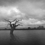 Brenne, les étangs (5)