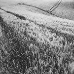 Gers, la trace (13)