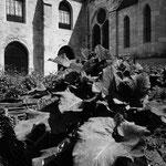 Le jardin médiéval (6)
