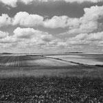 Vexin, plateau d'Auvers-sur-Oise (1)